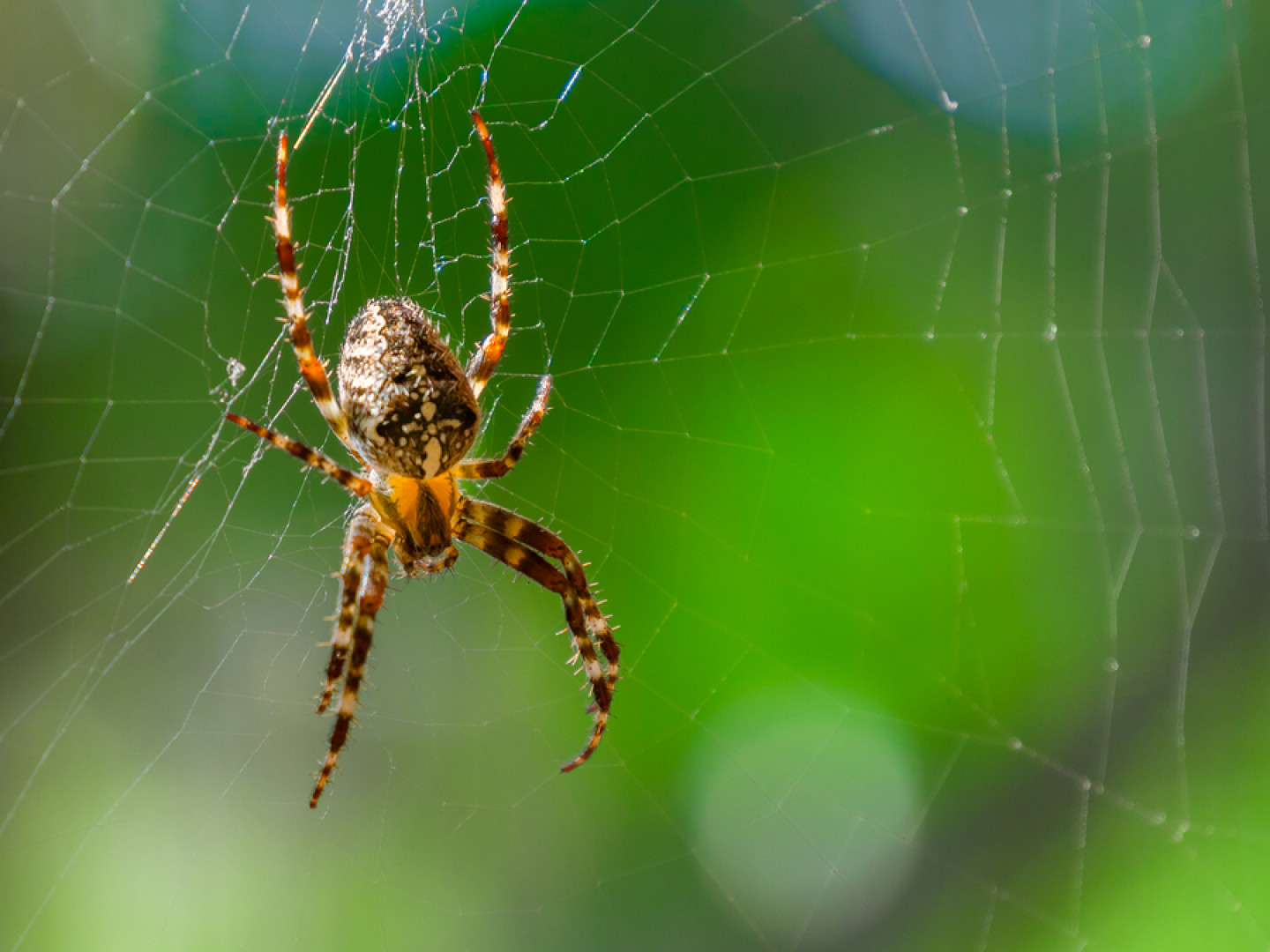 How to get rid of spiders in Fort Lauderdale, Wilton Manors & Pembroke Pines, FL
